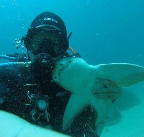 Акула приставала