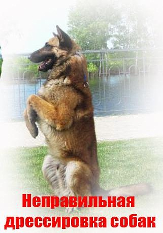 Неправильная дрессировка собак.