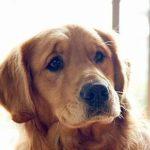 Расписание выставок собак в России на 2017 год