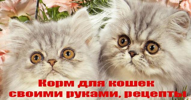 Корм для кошек своими руками рецепты 192