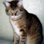 Можно ли стричь когти кошкам??
