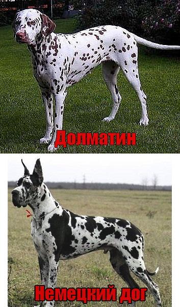 Начинающим собаководам на память