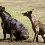 Самые странные собаки.