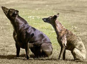 Самые странные собаки
