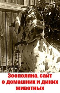 Эмоции собаки