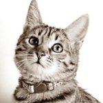Из чего же все таки делают корма для  кошек?