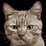 Судебные тяжбы из-за кота.