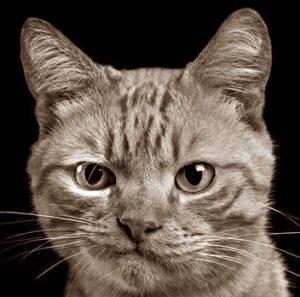 Судебные тяжбы из-за кота