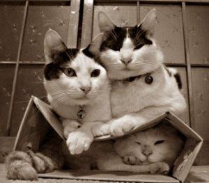 Почему так любят коробки коты и кошки