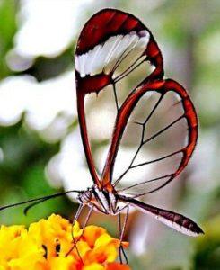 бабочками питаются сладким нектаром