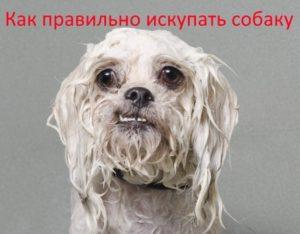 Как правильно искупать собаку